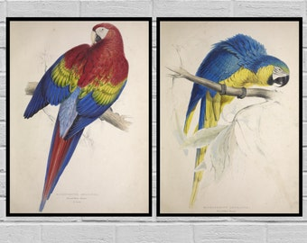 Vintage Parrot Set of TWO Parrot print set Giclee Canvas Natural History Vintage Parrot art Macaw Parrot SP373