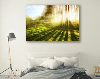 Sun shine Print Large Wall Art Print Fine Art Photography Print Nature Photography Neutral Wall Decor tree poster Decor Forest PH022