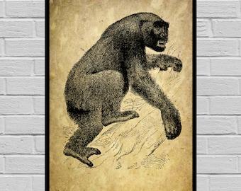 Antique Gorilla print Old Paper Vintage Dictionary page Gorilla poster Vintage Gorilla Art Black Gorilla print V24