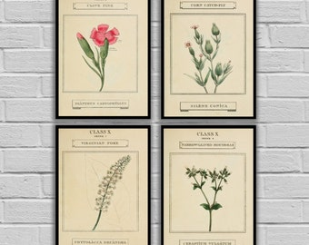 Vintage Flowers - Vintage Floral Set of 4 - Print or Canvas - Antique Floral Prints - Floral Wall Art - Flower Prints Set of 4 - 180-183