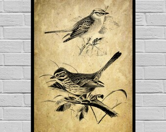 Antique Bird print Old Paper Vintage Dictionary page Bird poster Vintage Bird Art Black Bird print bird print V36