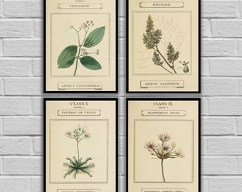 Vintage Botanical Herbs Prints - Set of 4 - Print or Canvas - Antique Herb Plants Prints - Botanical Wall Prints Set of 4 176-179