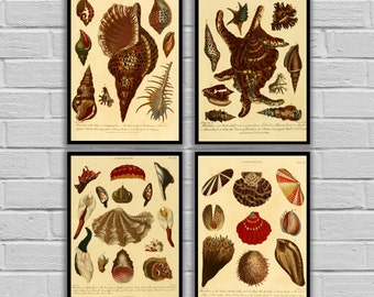 Vintage Conchology Art - Set of 4 - Print or Canvas - Vintage Seashells Prints - Nautical Wall Art Antique Beach Decor 270-273