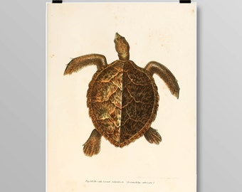 Vintage Turtle Art Turtle Wall Decor Antique Turtles Vintage Lithograph Reptile Print Turtle print Vintage Art Print 381