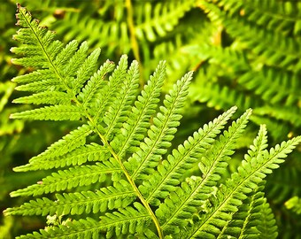 Forest Photography Greenery Nature Landscape Nature Photography Home Decor Leaves Wall Decor Forest PH0124