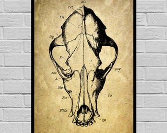 Antique Animal Skull print Old Paper Vintage Dictionary page Skeleton poster Vintage Skeleton Art Victorian Skeleton print V22