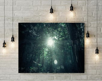 Forest Photography Tree Art Nature Landscape Nature Photography Home Decor Wall Decor Sunlight PH086