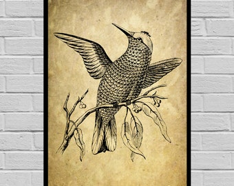 Antique Humming bird print Old Paper Vintage Dictionary page Humming bird poster Vintage Humming bird Art Black Humming bird print V32