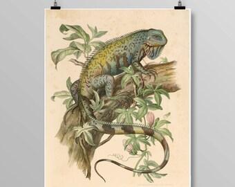 Antique reptile print Lizard poster Vintage Iguana Vintage lithograph Chameleon print Vintage Iguana print 306