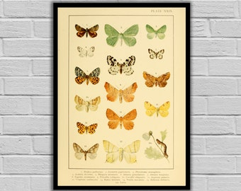 Vintage Butterfly - Butterflies - Moths and Butterflies Print/Canvas - Antique Butterflies Print - Butterfly Wall Art - 255
