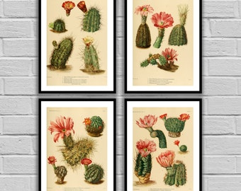 Cactus Print Set Cactus Prints Set of 4 Cactus American Southwest Decor Desert Art Desert Home Decor Cactus Wall Art 85-88