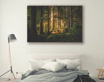 Forest Photography Trees in Forest Scenery Nature Landscape Nature Photography Home Decor Wall Decor Forest PH0129