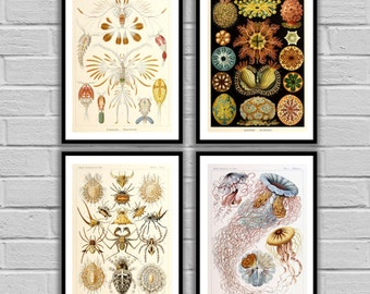 Vintage Ernst Haeckel Print - Vintage Set of 4 - Print or Canvas - Ernst Haeckel Art - Nautical art - Sea Life Prints - Set of 4 -2347