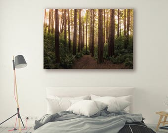Sun shine Print Large Wall Art Print Fine Art Photography Print Nature Photography Neutral Wall Decor tree poster Decor Forest PH024