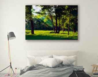 Tree Photography Tree Art Nature Landscape Nature Photography Home Decor Tree Photo  Wall Decor Summer decor PH054