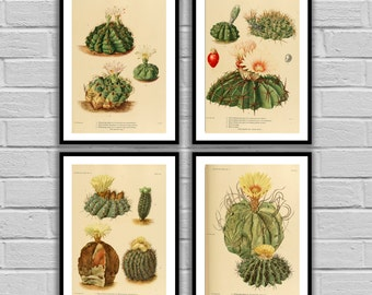 Cactus Print Set Cactus Prints Set of 4 Cactus American Southwest Decor Desert Art Desert Home Decor Cactus Wall Art 97-100