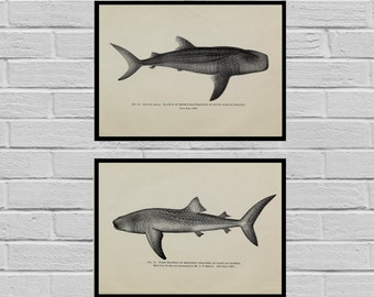 Set of Two Whale Shark Prints Art print Antique botanical print set Set of 2 prints Whale Shark Printable art Vintage prints sp480