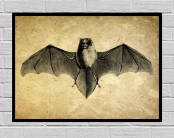Antique Bat print Old Paper Vintage Dictionary page Bat poster Vintage Bat Art Bat Print Hawk print Bat print H8