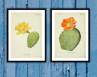 Set of cactus prints Art print Antique botanical print set Set of 2 prints Cactus Printable art Vintage prints Botanical art 51-52