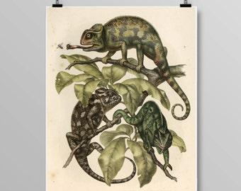 Antique reptile print chameleon poster Vintage lizard Vintage lithograph Chameleon print Vintage print 302