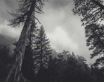 Forest Photography Tree Art Black and White Photography Nature Landscape Nature Photography Home Decor Wall Decor Forest PH091