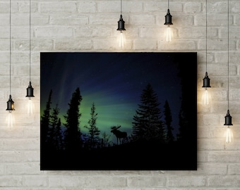 Forest Photography Animal Photography Night Sky Nature Landscape Nature Photography Home Decor Scenery  Wall Decor PH0110