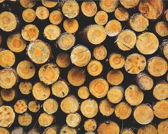 Tree Art Logs Nature Landscape Nature Photography Home Decor Wall Decor Seasonal Rustic decor PH095