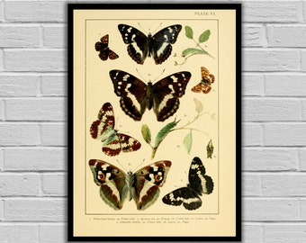 Vintage Butterfly Print - Butterflies - Moths and Butterflies Print/Canvas - Antique Butterflies Print - Butterfly Wall Art - 232
