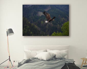 Nature Print Large Wall Art Print Bird of prey poster Photography Print Nature Photography Neutral Wall Decor Mountain Forest PH045