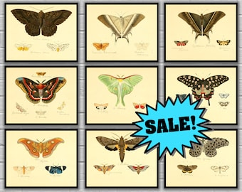 Vintage Butterfly Print Set of 9 - Papillon Butterfly Print Set - Giclee Canvas Prints - Posters - Art - Illustration - Wall Art - b1