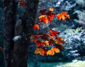 Tree Photography Forest Photography Nature Landscape Nature Photography Home Decor Seasonal Decor Wall Decor PH092