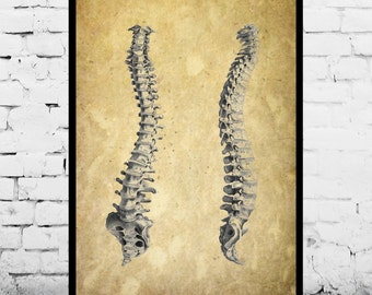 Anatomical Spine Patent Anatomical Spine Poster Anatomical Spine Blueprint  Anatomical Spine Print Anatomical Spine Art p447