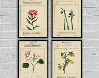 Vintage Botanical Art - Vintage Flowers Set of 4 - Print or Canvas - Antique Floral Prints - Floral Wall Art - Flower Prints 200-203