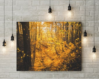 Forest Photography Trees in Forest Scenery Nature Landscape Nature Photography Home Decor Seasonal Decor  Wall Decor Forest PH0120