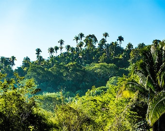 Tree Photography Mountain Photography Scenery Nature Landscape Nature Photography Home Decor Wall Decor Tropical PH088