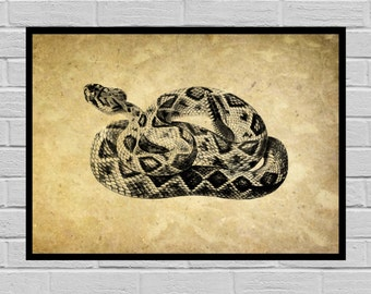 Vintage Rattlesnake Dictionary page Old Paper Vintage Dictionary page Rattlesnake poster Vintage Rattlesnake Art Rattlesnake Print H3