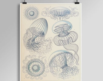 Ernst Haeckel Print West coast Jellyfish Print Blue Jellyfish Poster Nautical Wall Art Coastal Art Nautical print Sea Life Print 001