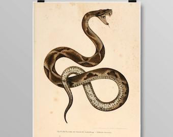 reptile print Vintage Snake art  viper snake snake wall decor Vintage Snake Vintage lithograph Snake print Vintage print 369