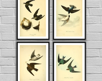 Swallows - Vintage Bird Set of 4 - Print or Canvas - Antique Swallow Prints - Bird Wall Art - Bird Prints - Set of 4 Birds - 65-68