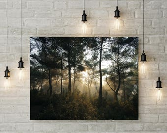Forest Photography Trees in Forest Sunlight Nature Landscape Nature Photography Home Decor  Wall Decor Forest canvas art print poster PH093