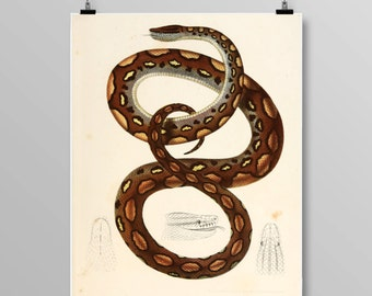Antique reptile print Reptile poster Vintage Snake Vintage lithograph Snake print Vintage print 338