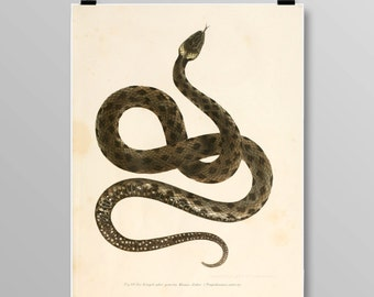 Vintage Snake art reptile print grass snake snake wall decor Vintage Snake Vintage lithograph Snake print Vintage print 358