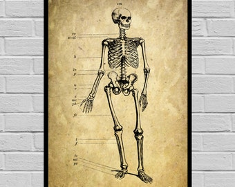 Antique Skeleton print Old Paper Vintage Dictionary page Skeleton poster Vintage Skeleton Art Victorian Skeleton print V21