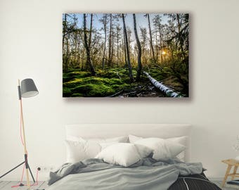 Tree Photography Forest Photography Sunsets Nature Landscape Nature Photography Home Decor Scenery  Wall Decor Forest PH0116