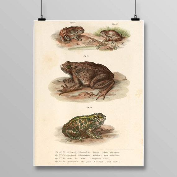 European Green Toad Decor Frog Wall Art Antique Frogs and   Etsy