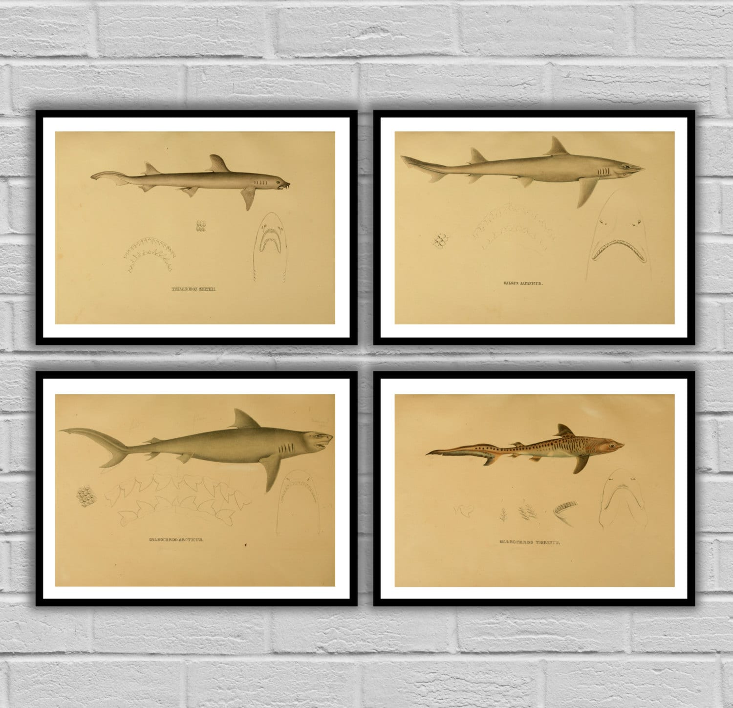 Shark Decor print Set of 4 Boy\'s bedroom nautical Decor Shark Art ...