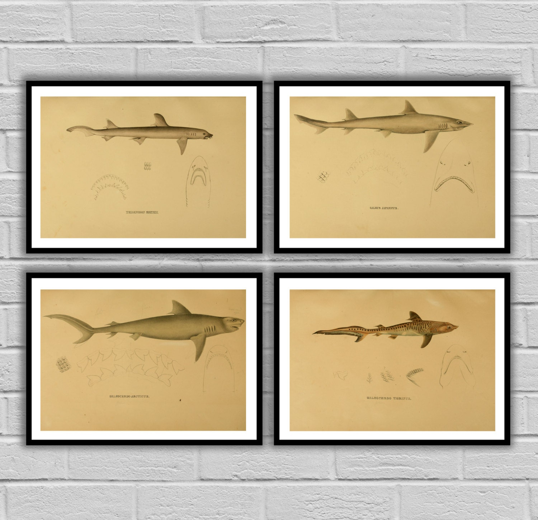 Shark Decor print Set of 4 Boy\'s bedroom nautical Decor Shark Art ...