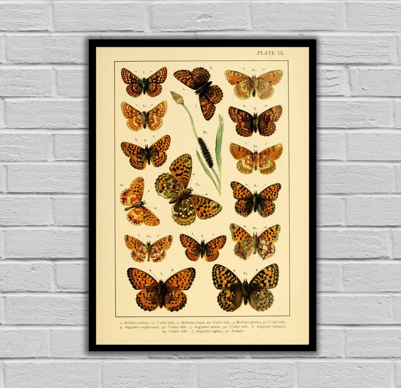 Vintage Butterfly Art - Butterflies - Moths and Butterflies Print ...