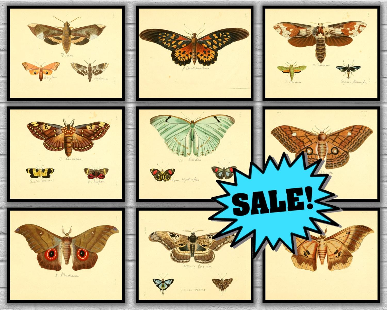 Vintage Butterfly Print Set of 9 - Papillon Butterfly Print Set ...