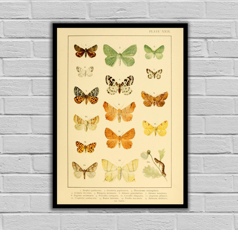 Vintage Butterfly - Butterflies - Moths and Butterflies Print/Canvas ...